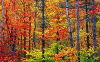 Earth - Autumn Wallpapers and Backgrounds ID : 22538