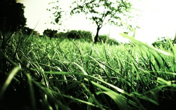 Earth - Grass Wallpapers and Backgrounds ID : 228814