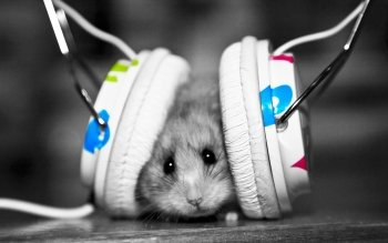 Música - Headphones Wallpapers and Backgrounds ID : 229096