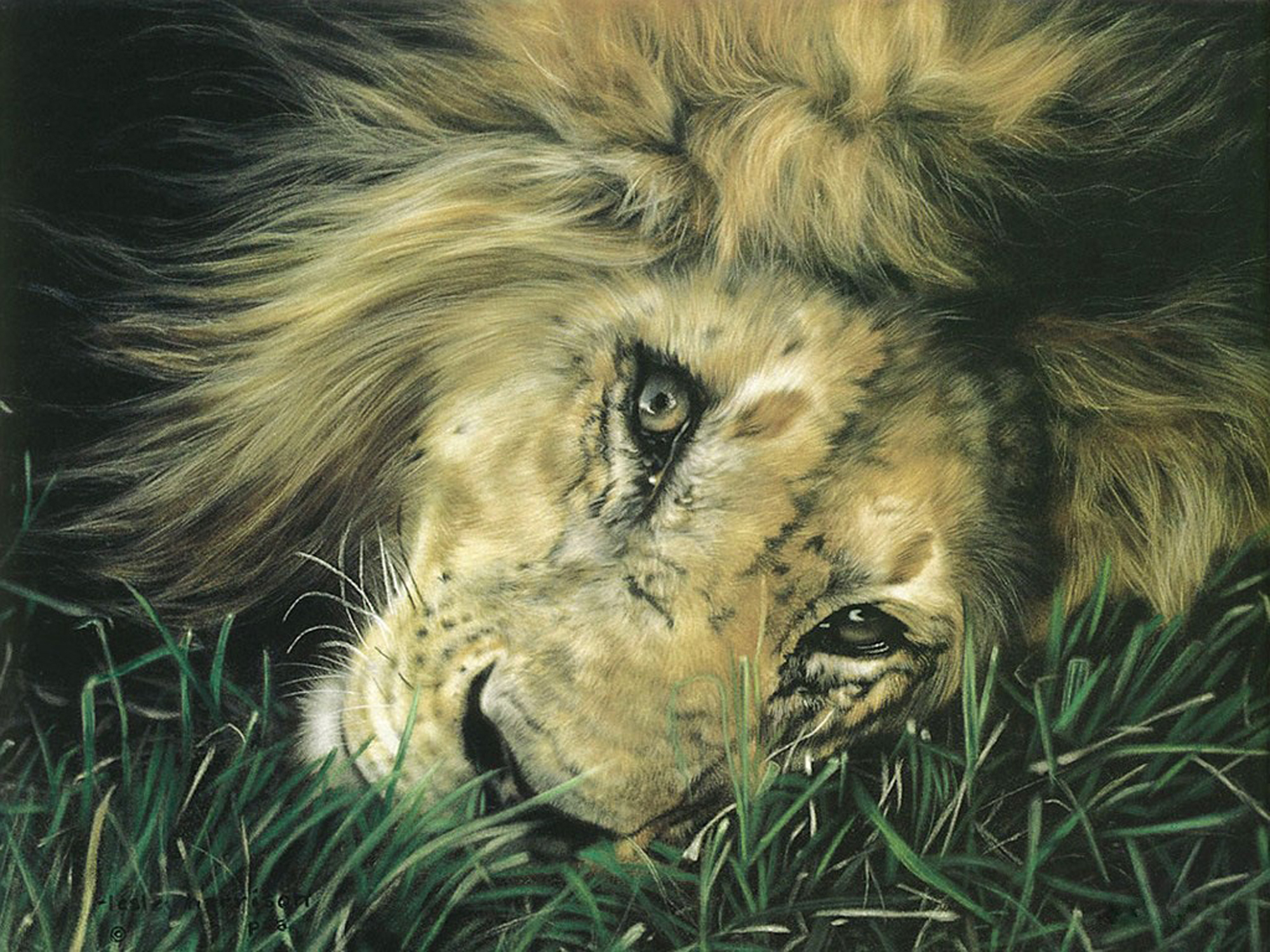 Animal - Lion  Artistic Wallpaper