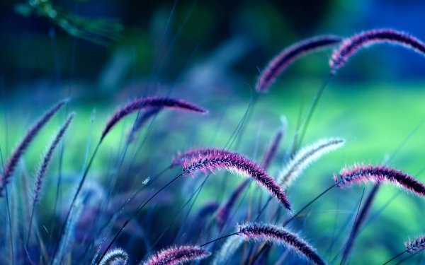 Photography Close Up HD Wallpaper   Background Image