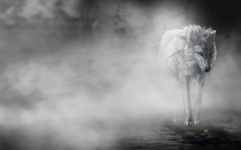Animal - Wolf Wallpapers and Backgrounds ID : 236488