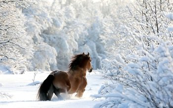 Animal - Horse Wallpapers and Backgrounds ID : 239834