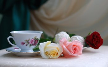 Photography - Still Life Wallpapers and Backgrounds ID : 241286