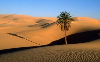 Earth - Desert Wallpapers and Backgrounds ID : 24576