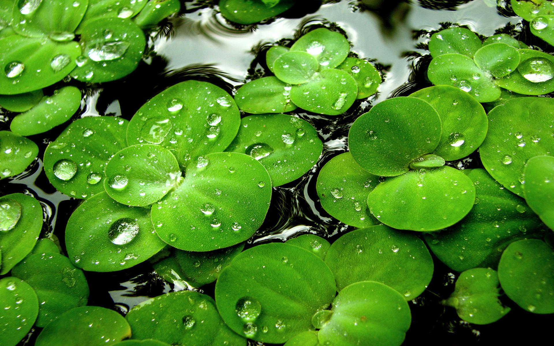 green plant desktop - photo #12