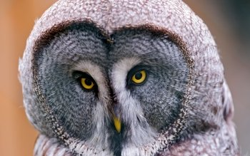 Animal - Owl Wallpapers and Backgrounds ID : 247724