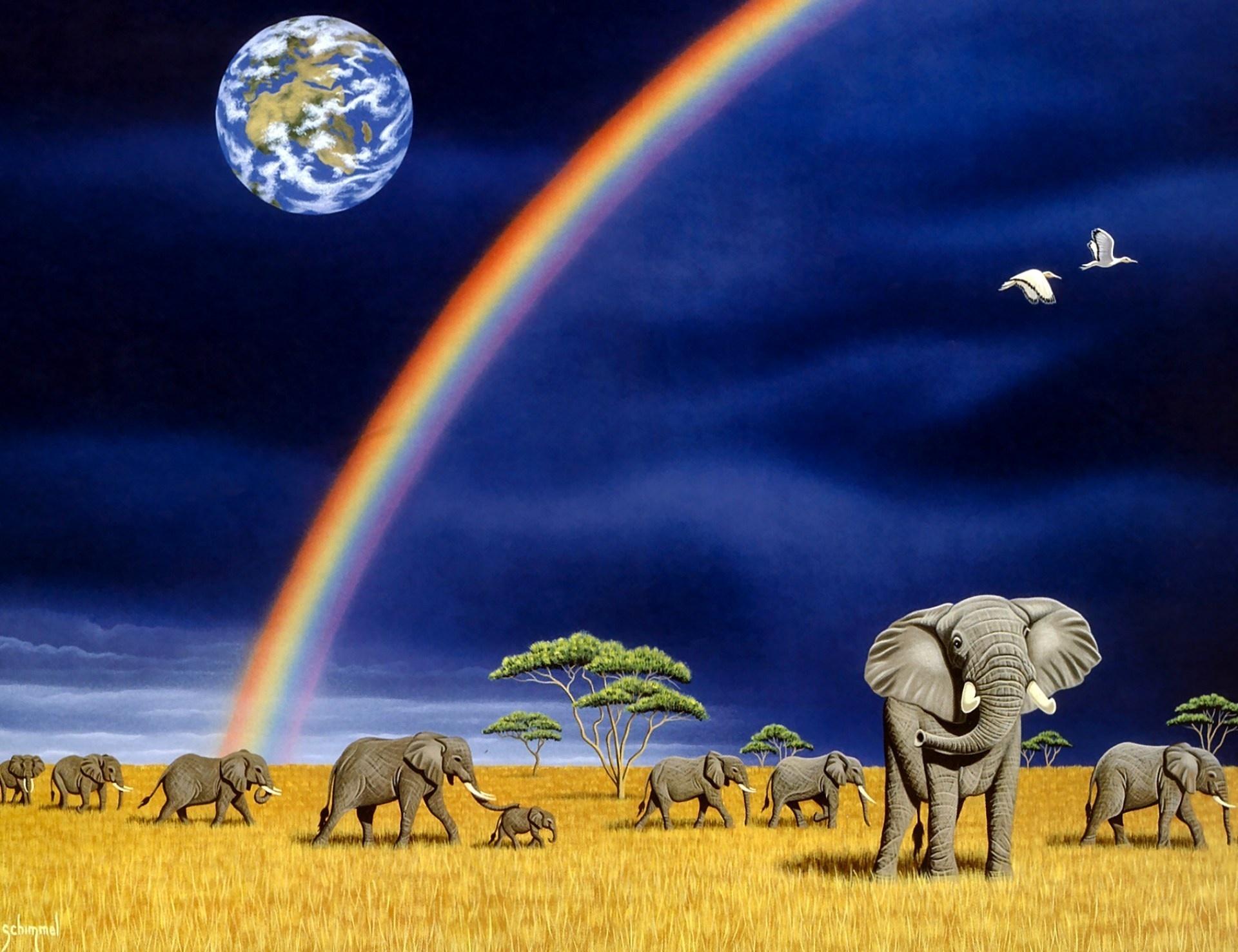 Hd wallpaper elephant - Animal Elephant Wallpaper