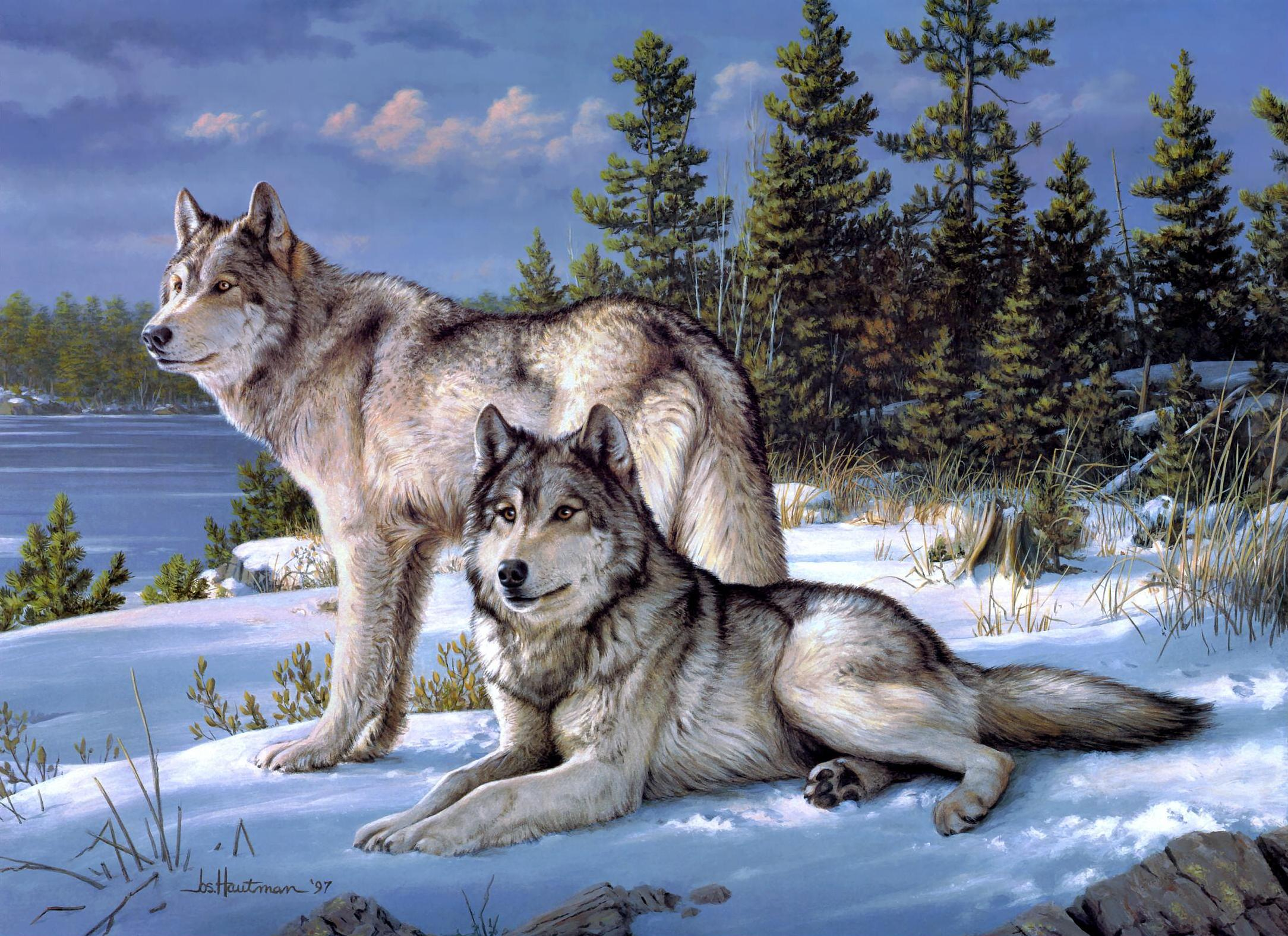 1023 Wolf HD Wallpapers