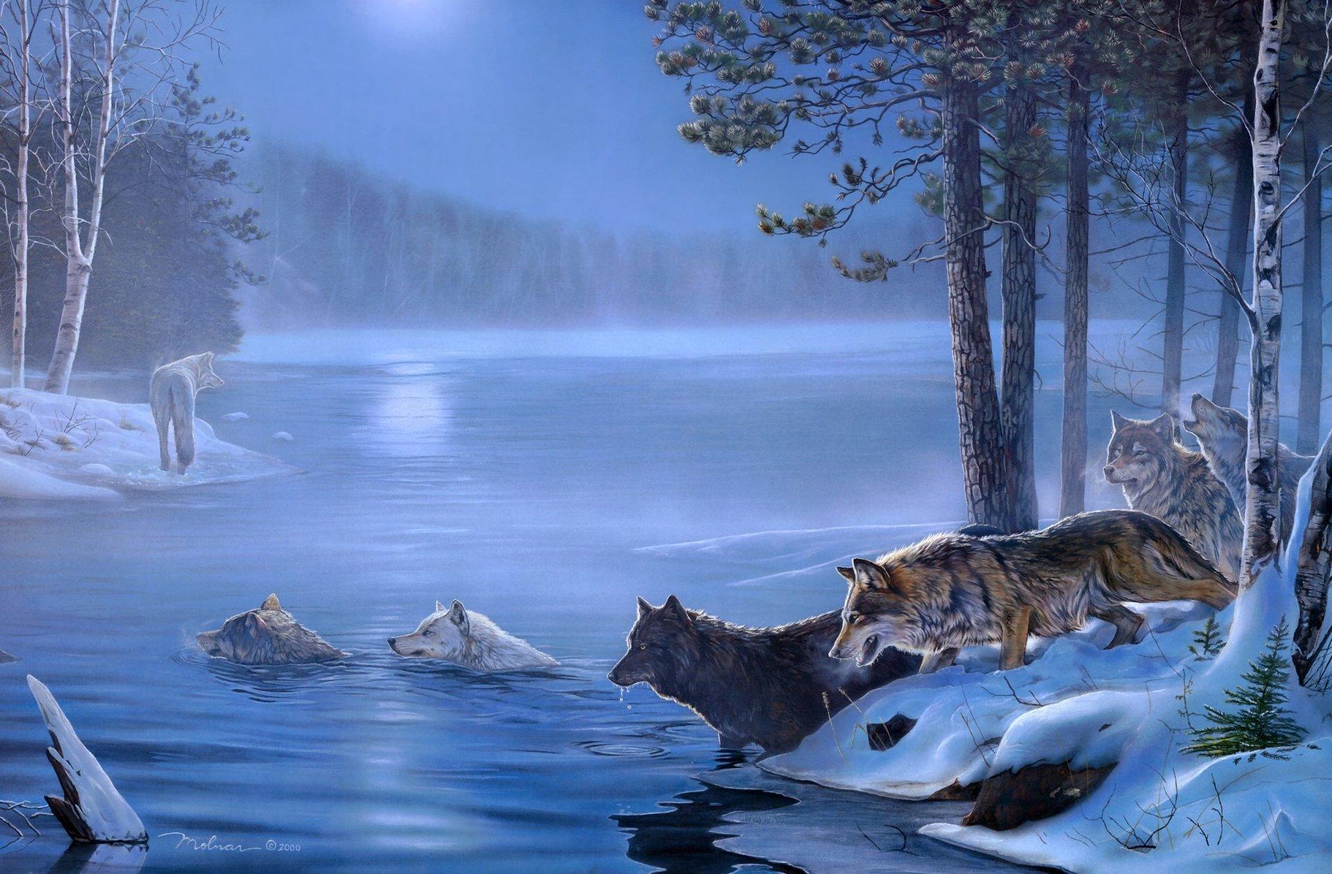 Animal - Wolf  Lake Winter Wildlife Artwork Wallpaper
