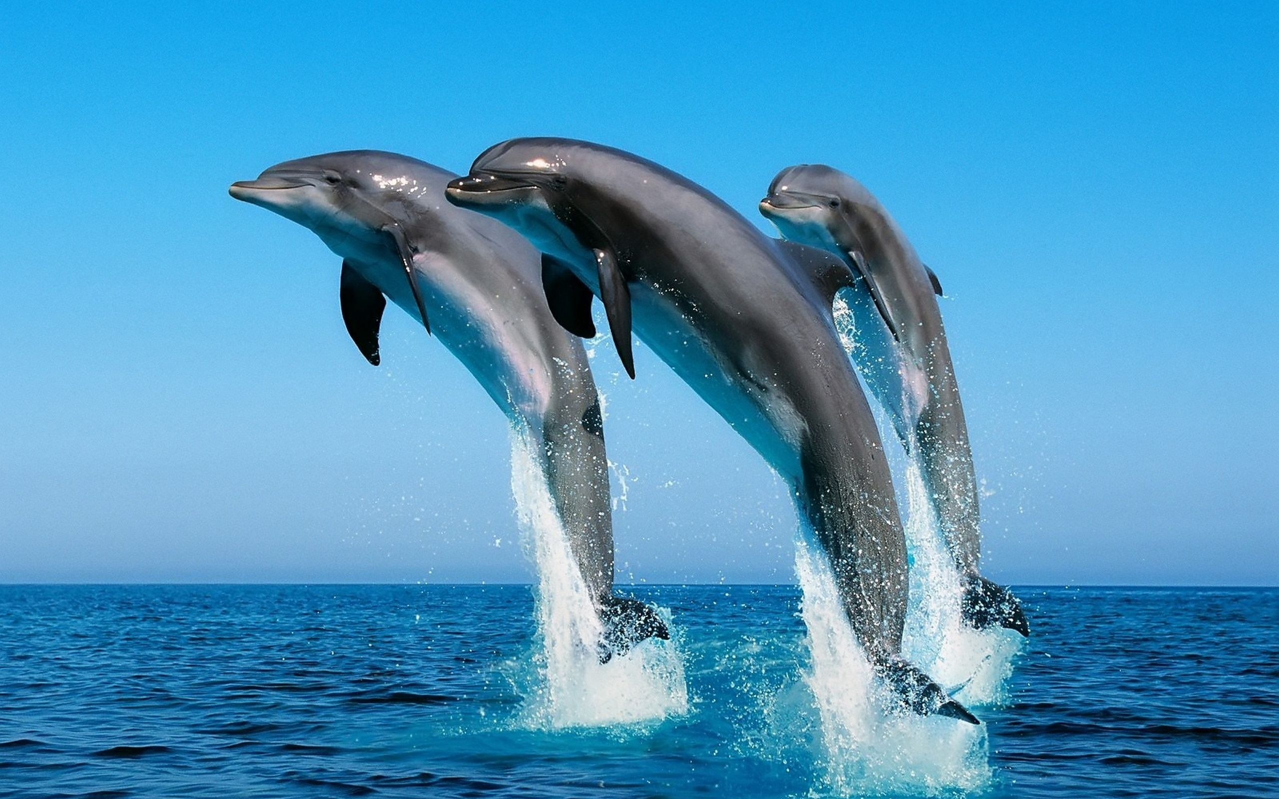 204 dolphin hd wallpapers backgrounds wallpaper abyss