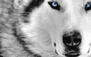 Animal - Dog Wallpapers and Backgrounds ID : 249356