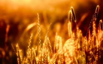 Earth - Grass Wallpapers and Backgrounds ID : 249734