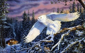 Tier - Snowy Owl Wallpapers and Backgrounds ID : 253914