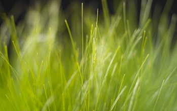 Earth - Grass Wallpapers and Backgrounds ID : 2548