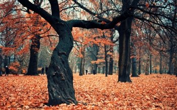 Photography - Autumn Wallpapers and Backgrounds ID : 255068