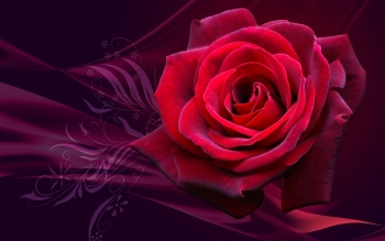 Holiday - Valentine's Day Wallpapers and Backgrounds ID : 255404