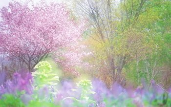 Earth - Spring Wallpapers and Backgrounds ID : 255806