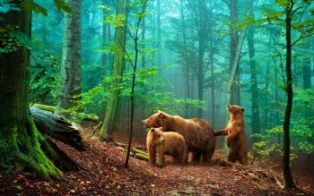 Animal - Bear Wallpapers and Backgrounds ID : 256908