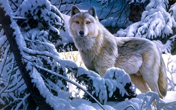 Animal Wolf White Wolf Winter Snow Forest HD Wallpaper   Background Image