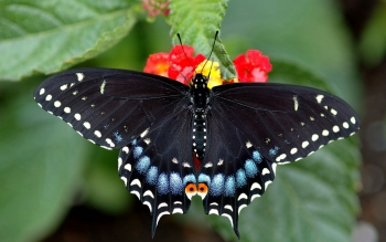 Animal - Butterfly Wallpapers and Backgrounds ID : 259576