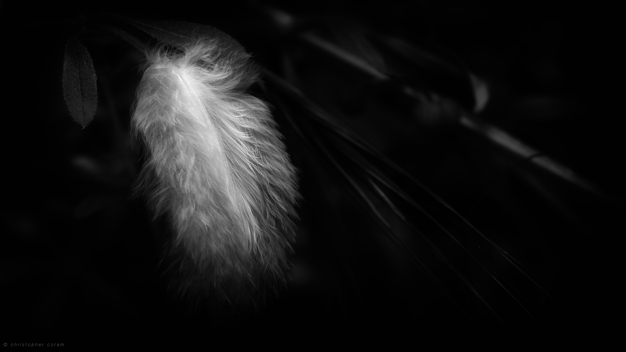 feather on a breath of wind computer wallpapers desktop