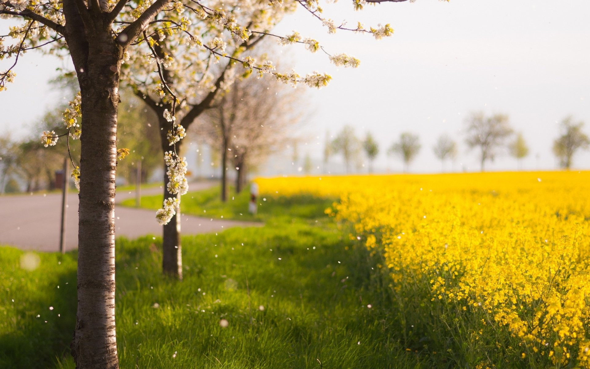 Earth - Spring  Flower Blossom Road Wallpaper