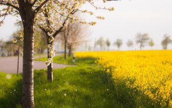 Earth - Spring Wallpapers and Backgrounds ID : 267086