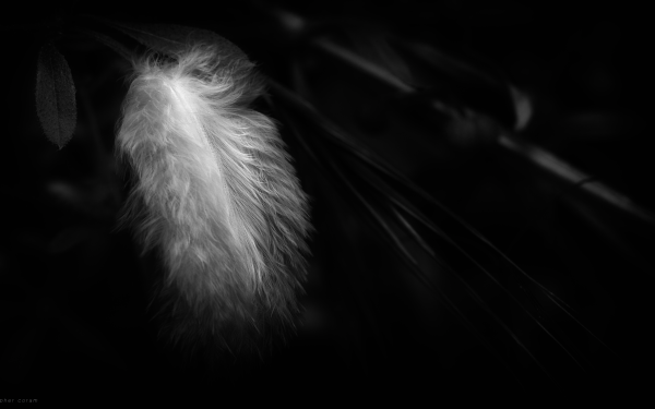 Photography Feather Black & White HD Wallpaper   Background Image