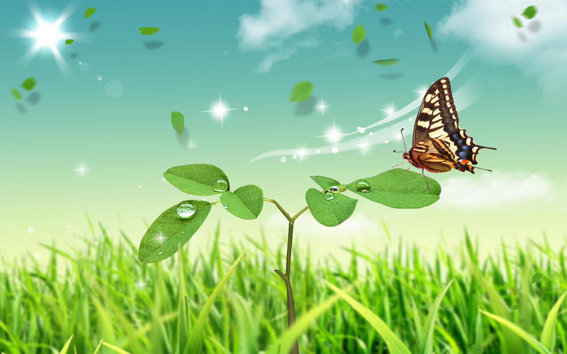 Butterfly Full HD Wallpaper And Background Image