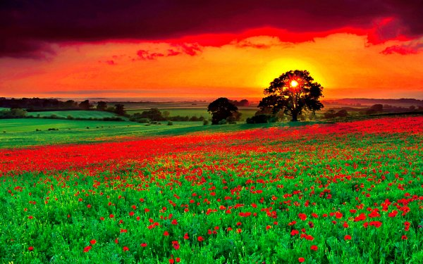 Earth Field HD Wallpaper   Background Image