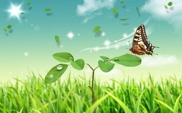 Animal Butterfly Plant Leaf Green Artistic HD Wallpaper | Background Image