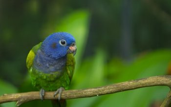 Animal - Parrot Wallpapers and Backgrounds ID : 275194