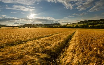 Earth - Wheat Wallpapers and Backgrounds ID : 275846
