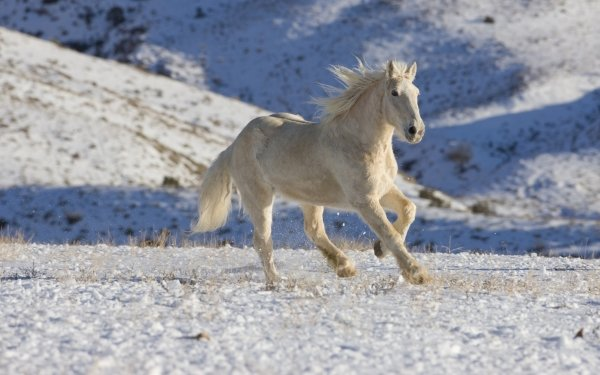 Animal Horse Snow HD Wallpaper | Background Image