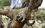 Preview Jaguars