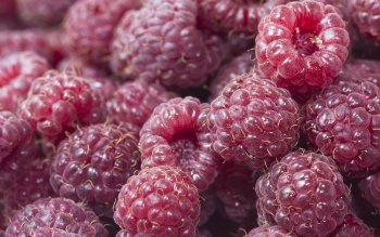 Food - Raspberry Wallpapers and Backgrounds ID : 276356