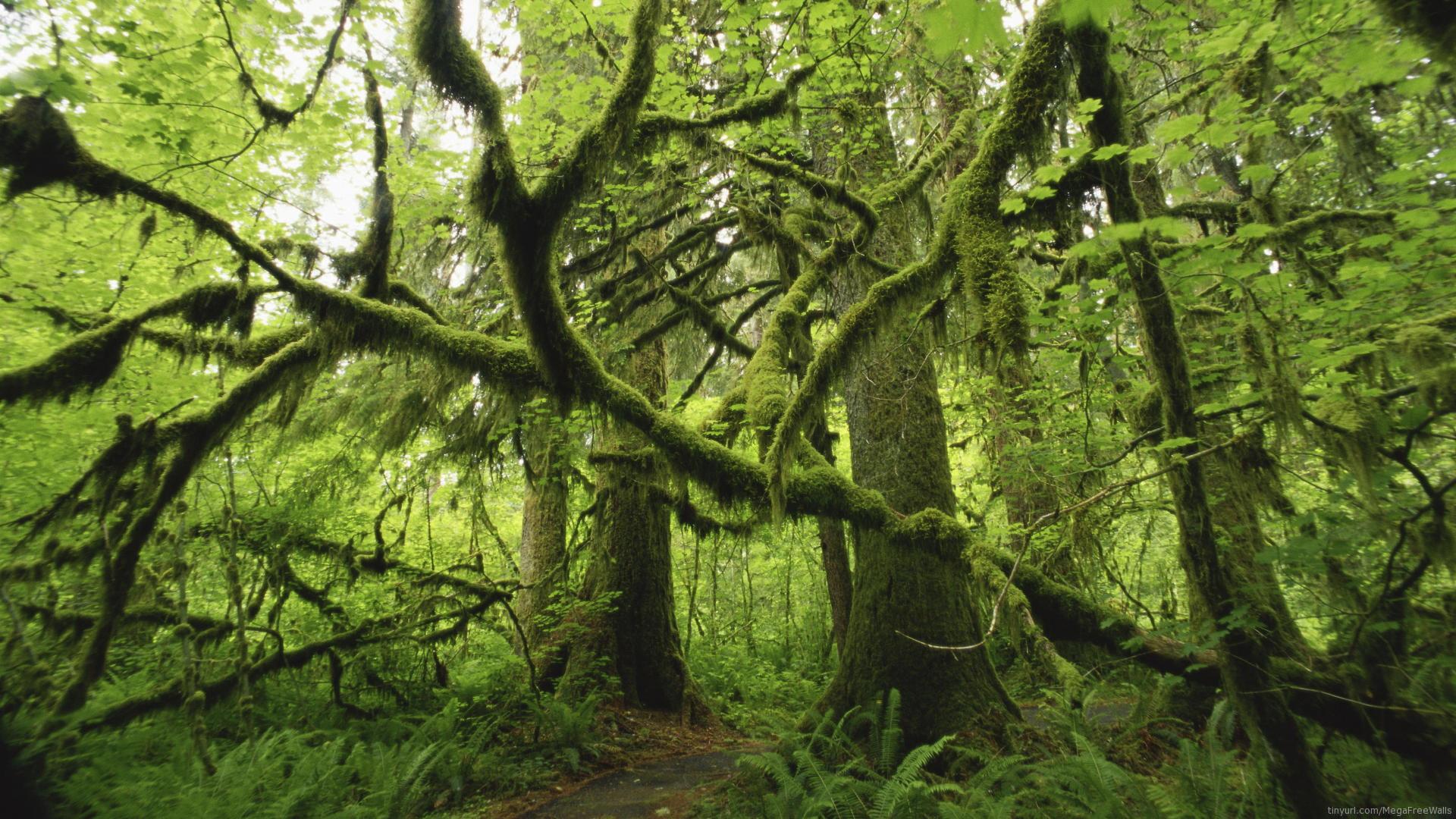 rainforest full hd wallpaper