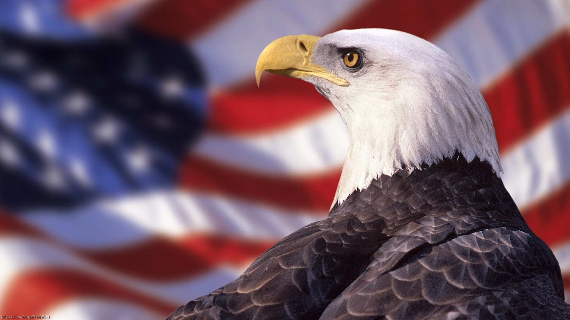 239 Bald Eagle HD Wallpapers