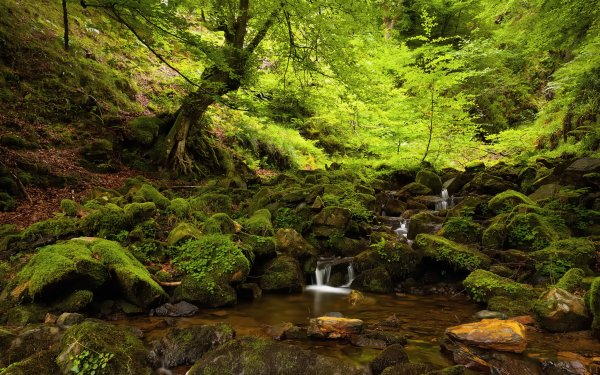 Earth Forest Creek Nature Green HD Wallpaper | Background Image