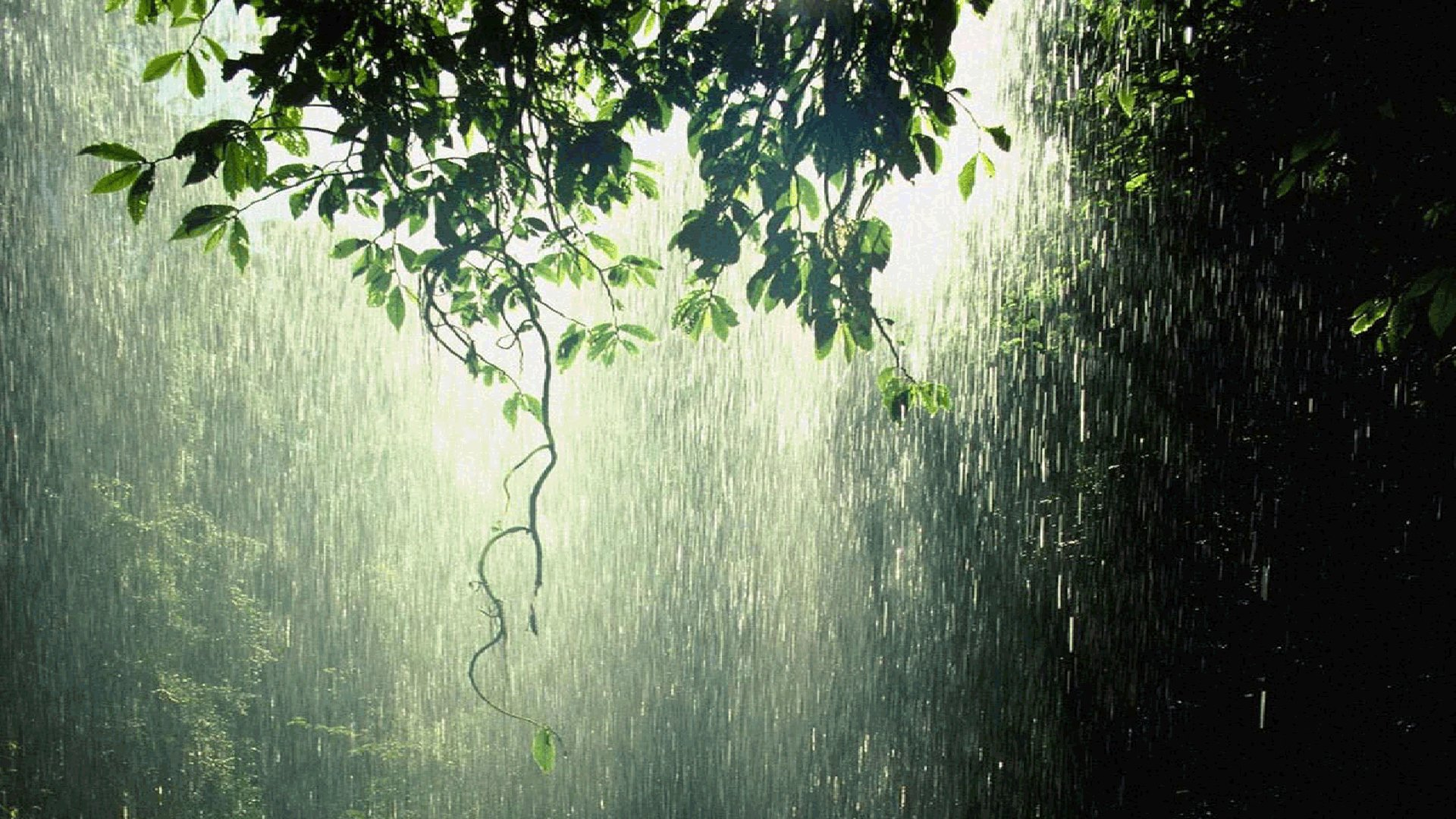 Photography - Rain  Forest Green Wallpaper