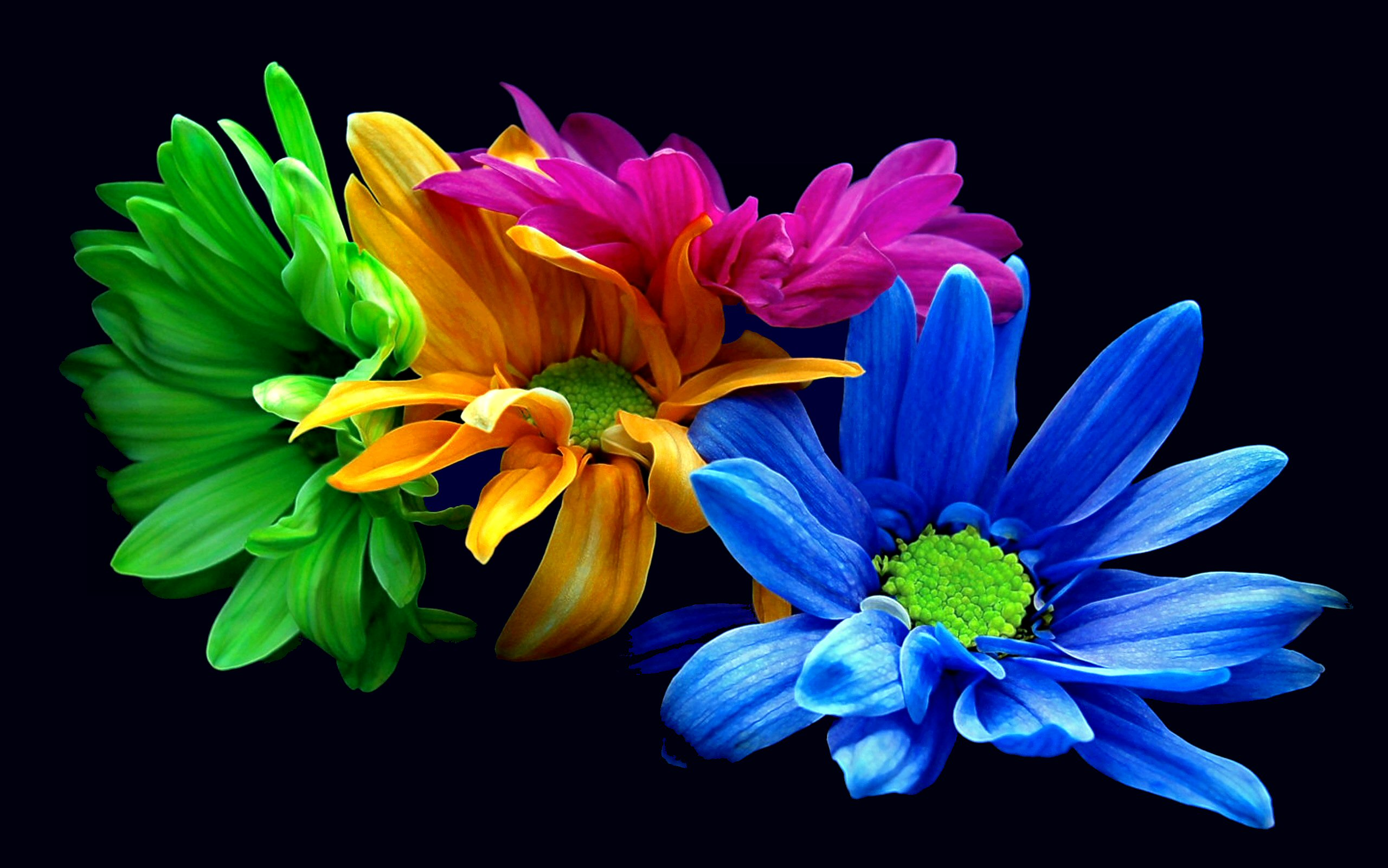 352 blue flower hd wallpapers background images wallpaper abyss izmirmasajfo