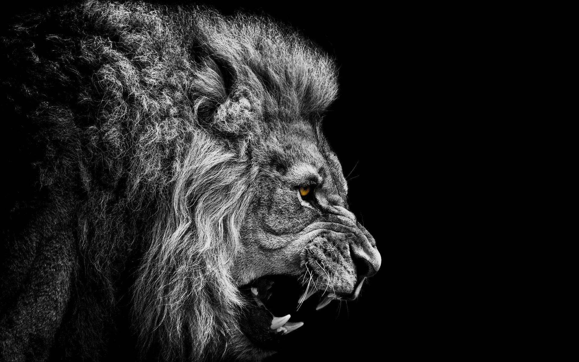Fantastic Wallpaper Lion Facebook - thumb-1920-282184  You Should Have_94489.jpg