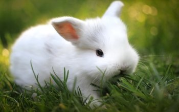 Animal - Rabbit Wallpapers and Backgrounds ID : 282806