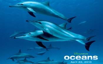 Movie - Oceans Wallpapers and Backgrounds ID : 284464
