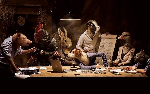 Animal Artistic Humor Funny HD Wallpaper | Background Image