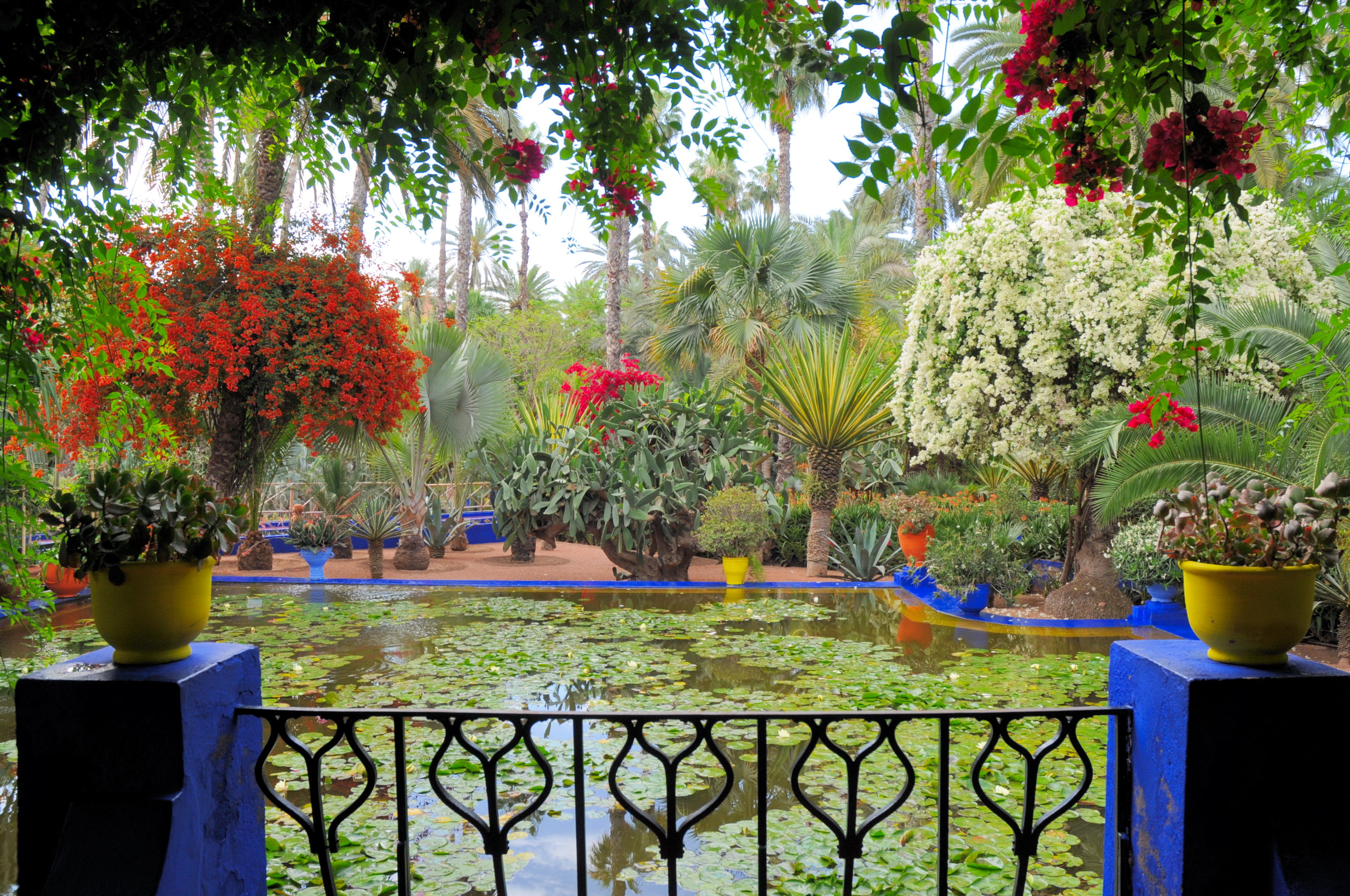 Morocco marrakech jardin majorelle full hd fond d 39 cran for Jardin ysl marrakech