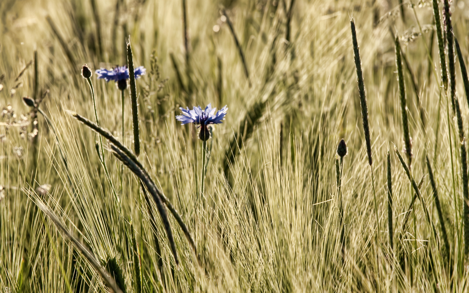 Earth - Grass  - Flowers - Flower Wallpaper