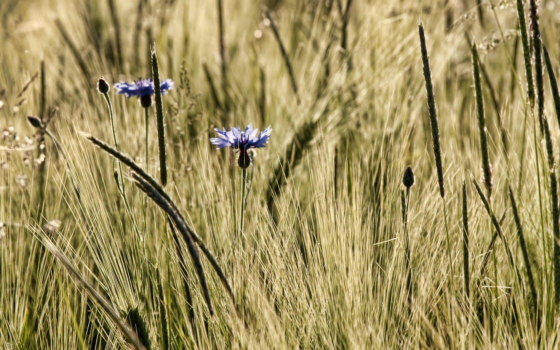 Earth - Grass  Flower Wallpaper