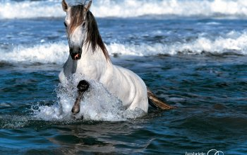 Animal - Horse Wallpapers and Backgrounds ID : 287208